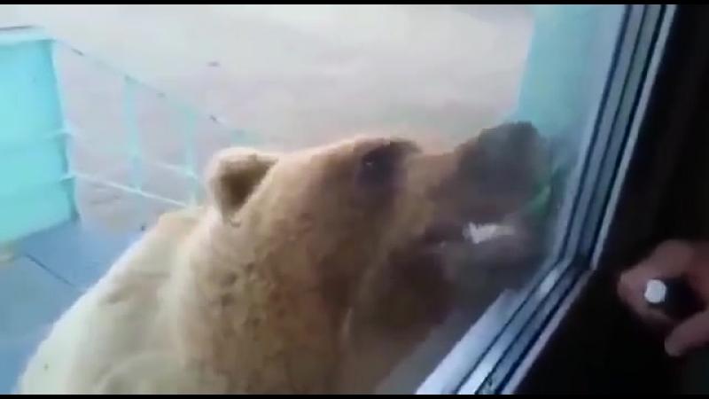 Вахтовики искренне верят, что медведь с ними разговаривает.