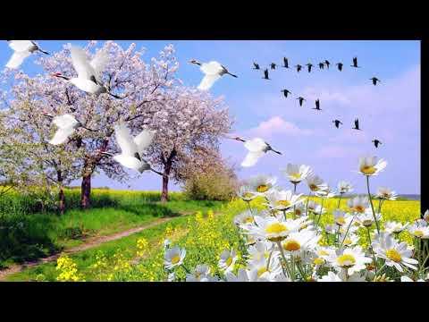 Красивая Песня Послушайте ✦✦ТЫ КАК ВОЗДУХА ГЛОТОК ✦ Валерий Капризов Не стареть душой