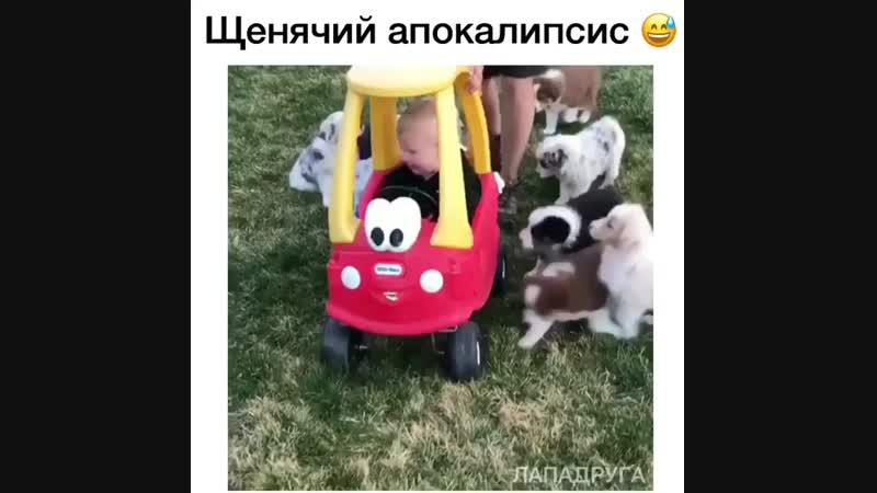 Это же собако-зомби, они заразят его няшностью и мимимишностью!