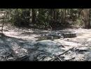 Фото охота на крокодилов
