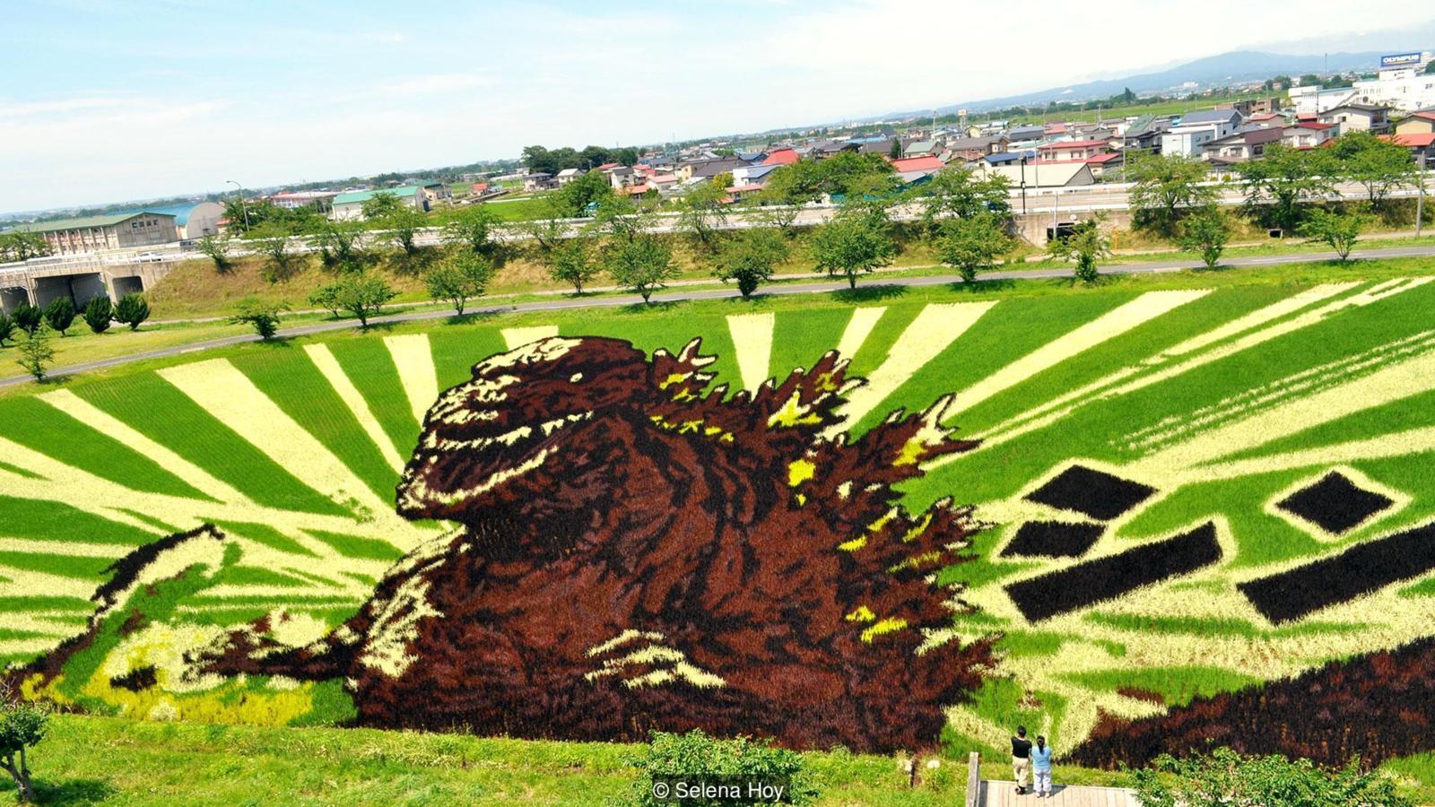 Японцы выращивают 3D-картины на рисовых полях (картины создаются с помощью посадки разных видов риса)