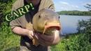Carp fishing with week old bait