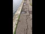 Мор рыбы в водохранилище Дрозды