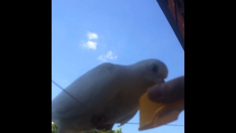 Голубка прилетела к нам в гости