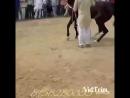 Лошадь танцует.mp4