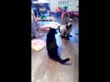 Ребенок развел дерущихся котов?