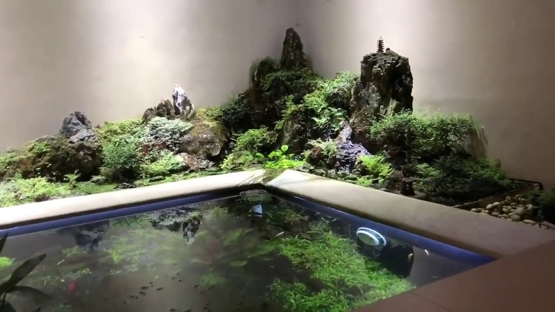 Paradise of Discus. 18 000 Liters Discus Pond and Breeding Room. Idr Go