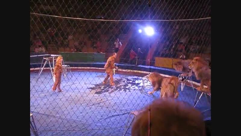 Вчера в казанском цирке