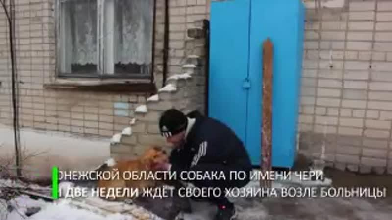 В Воронежской области собака по кличке Чери почти две недели дежурит у здания одной из больниц