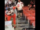 A fan at the Browns game caught a possum in the stands