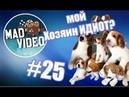 Mad Video: Лучшие ролики недели 25 Мой хозяин идиот