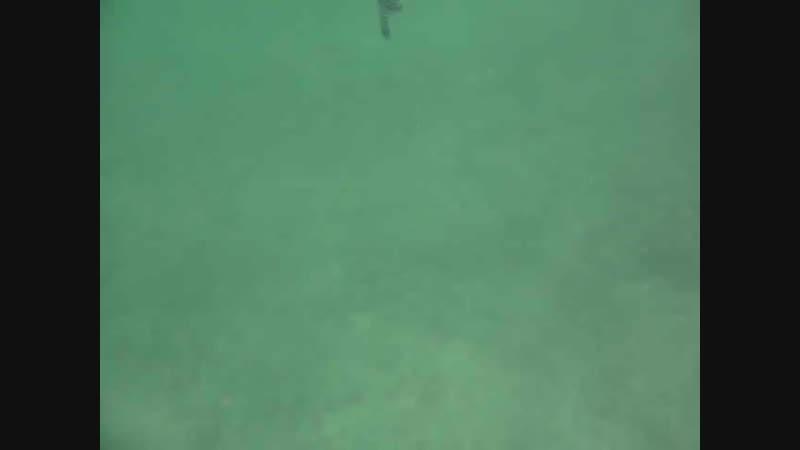Acariciando un pez botete 480 X 640 mp4