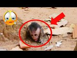 You Will Cry Loudly After Watching This Video, Why Big Monkey Do Like This On Baby Monkey Donny