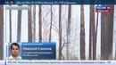 Новости на Россия 24 Лесные пожары в Забайкалье продолжают распространяться