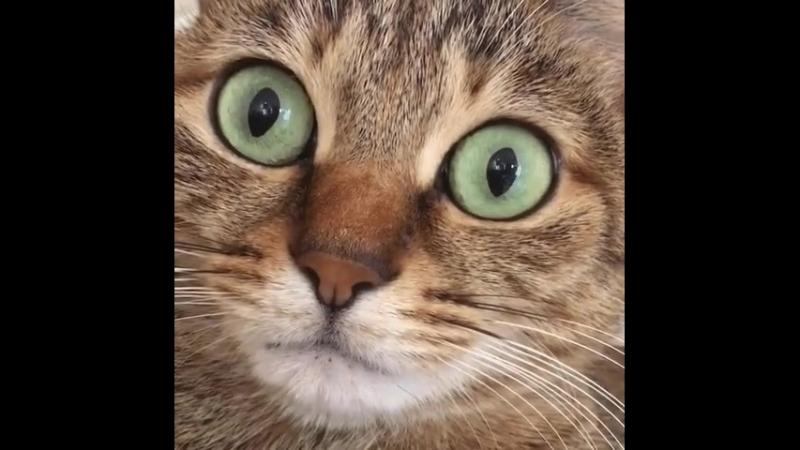 Котик ик У котика икота