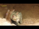 Real Anaconda Stalks Cat Home - Brave Cat_s Mother(360P).mp4