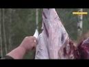 Как ободрать кабана не испортив мясо. Как разделывать кабана