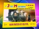 Планета обезьян Коллекция экзотических животных