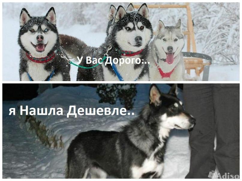 Валюша Шереметьева | Рыбинск