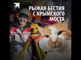 Рыжая бестия с Крымского моста