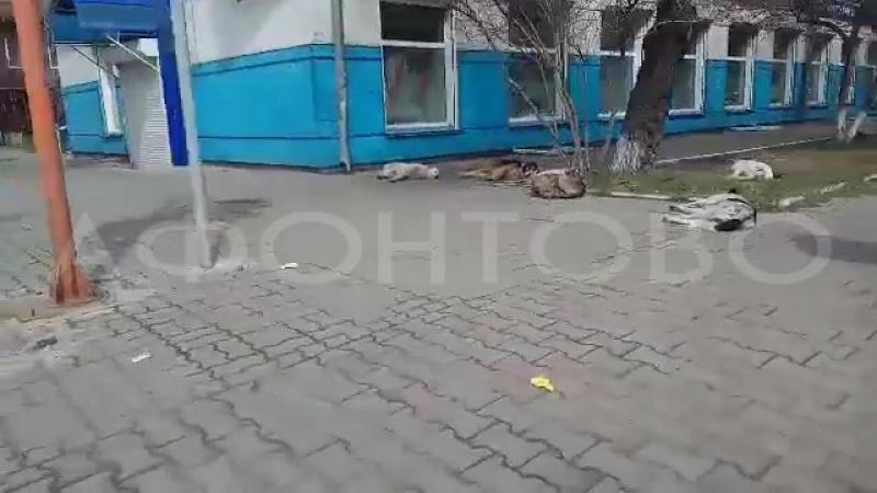 Собаки в центре города