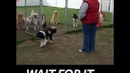 Well behaved dogs wait for their name to be called