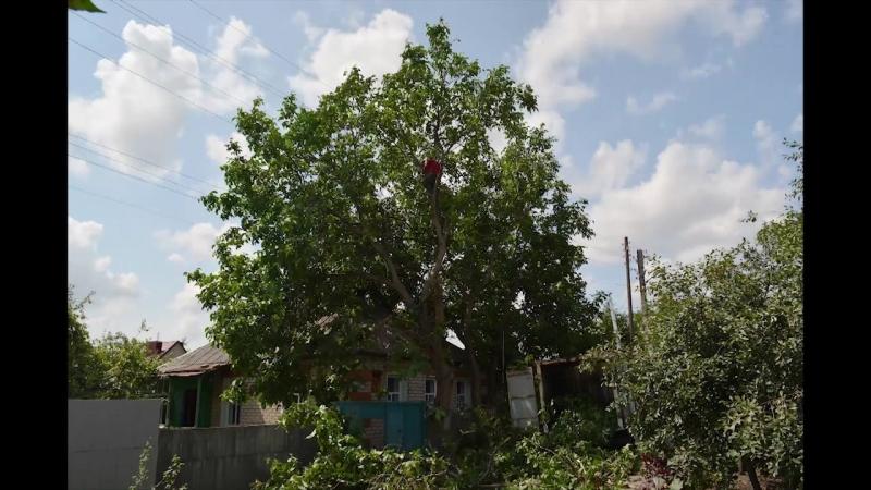 спилить дерево Харьков Киев cut tree (timelaps 2 work days and copter)