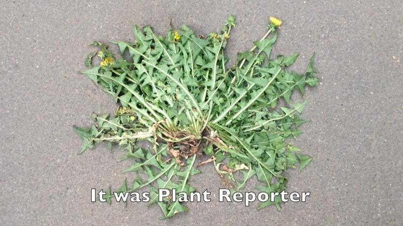 РАСТИТЕЛЬНЫЙ ВЕСТНИК ВЫПУСК 14 PLANT REPORTER EPISODE 14 ENGLISH SUBTITLES