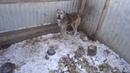 Мертвые собаки в приюте в Чигирях