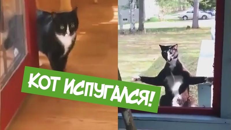ТОП Приколы Октябрь 2018 Смешное видео! Кот испугался!