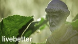 Healing Gregorian Chants with Relaxing Rain Calming Music for Inner Peace Monk Songs