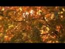 Черный кофе Листья - С ветки падающий лист (Переступи порог[Low,640x360]