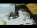 Котёнок в добрые руки ❤ Мистер Хоуп
