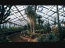 Городские открытия Ботанический сад времён блокады