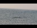 Утро на Байкале 28.07.2018 синхронное плавание