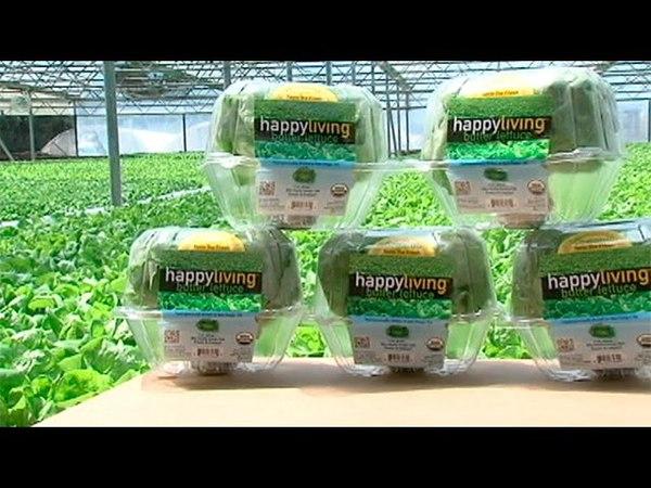 San Diego Hydroponic Farm