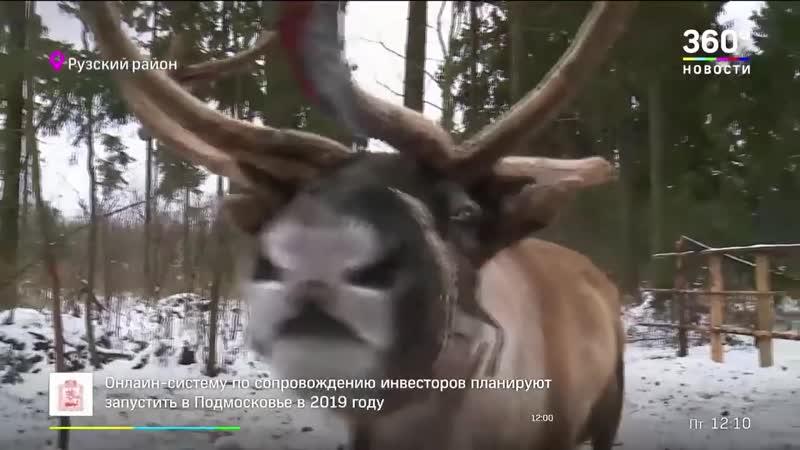 Зима в Подмосковье. Оленья ферма и отдых в Рузе