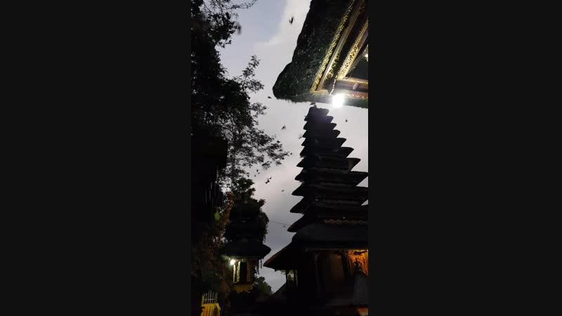 храм летучих мышей