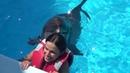 Плавание с дельфинами Абсолютный кайф Дельфинарий Оскар Генгорка Арабатская стрелка
