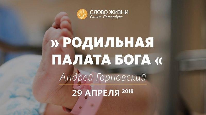 Родильная палата Бога - Андрей Горновский, Слово Жизни, г. Санкт-Петербург