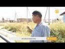 Почти три с половиной года житель Алматинской области судится с женой за алимент
