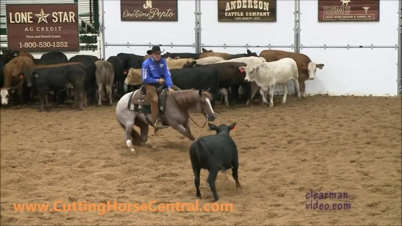 For_Sale-_Swiss_Cat_Pepto_2009_Red_Roan_mare_NCHA_LTE-_$165K[1]