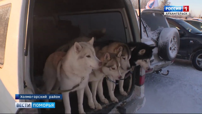 В Холмогорском районе прошел фестиваль ездового спорта Поморские кудесы