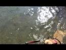 А Кася поленилась от берега отплыть