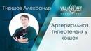 Артериальная системная гипертензия у кошек Гиршов Александр