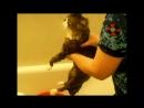 Кот матюкается во время купания