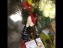 клепа и цветы