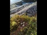 Левый берег Попов-острова