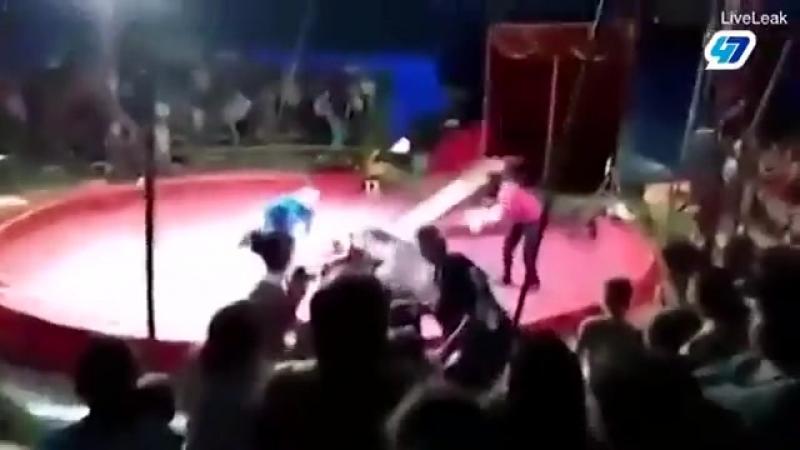 Медведь напал на дрессировщика [ vk.comCINELUX ]