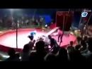 Медведь напал на дрессировщика [ CINELUX ]